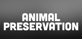 Animal Preservation Minto