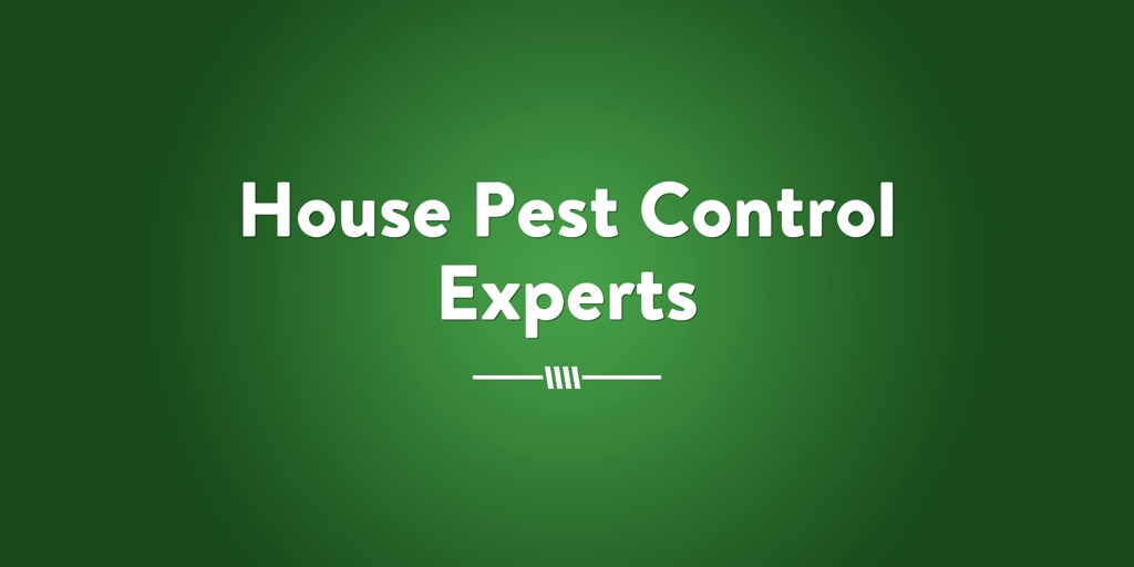 House Pest Control Experts Blue Haven Pest Control Services Blue Haven