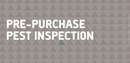 Pre-Purchase Pest Inspection Sans Souci