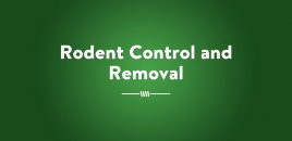 Rodent Control and Removal | Adelaide Plains Pest Control Services Adelaide