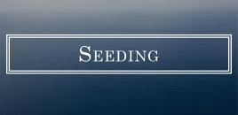 Seeding | Dapto Lawn Cutting and Garden Maintenance Dapto
