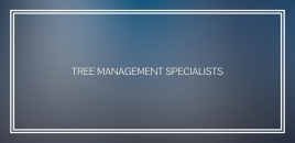 Tree Management Specialists Queens Park