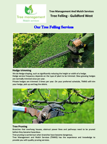 Our Tree Felling Services Guildford West